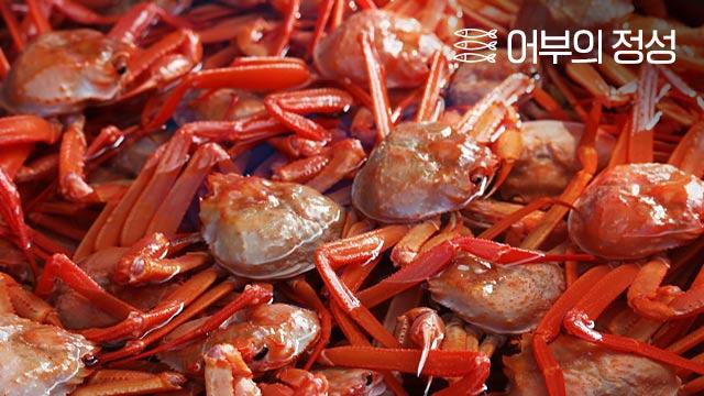 제철 홍게! 경북포항의 라면용 홍게포함 外 3종