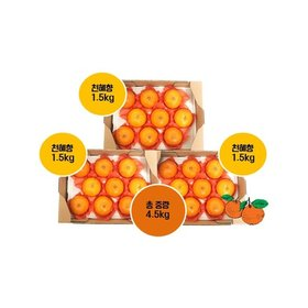 햇 제주 천혜향 1.5kg*3박스 , 총 4.5kg (과당 150g 이상)